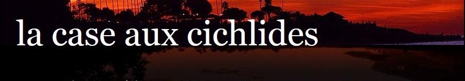 la-case-aux-cichlides