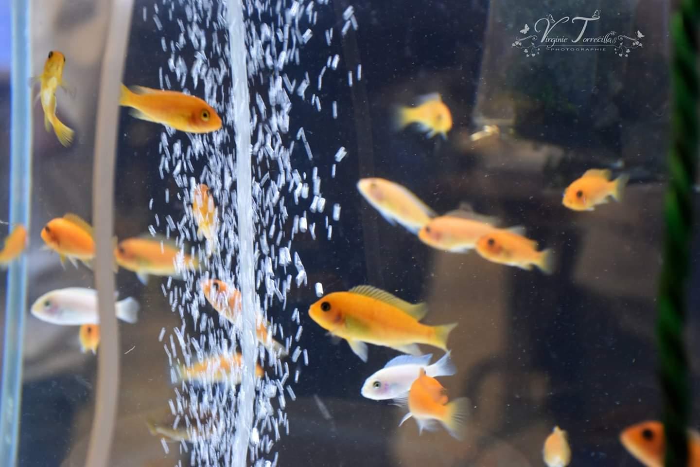 Rencontre aquariophile
